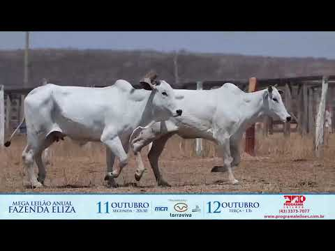 LOTE 163