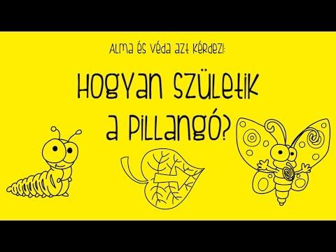 Alma és Véda: Hogyan Születik a Pillangó? letöltés