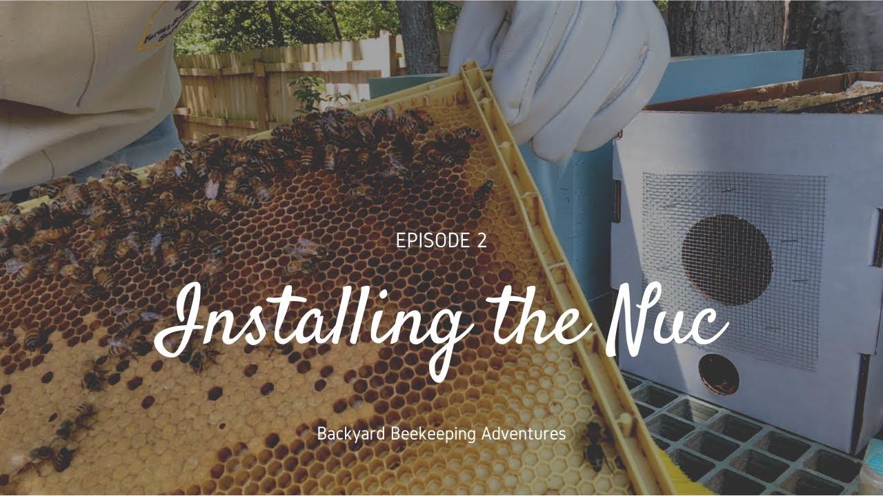 Backyard Beekeeping  Episode 2