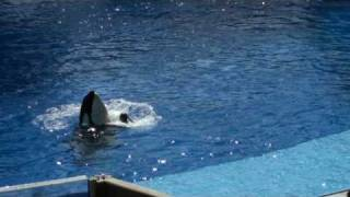 Trainer Dawn Brancheau with Tilikum at Sea World/Orlando