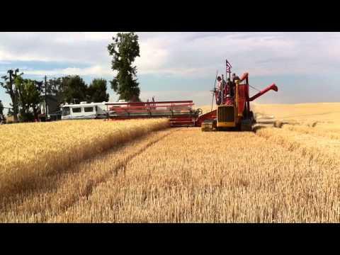 vintage harvest davenport
