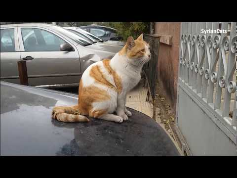 Daily Life of Stray Cats in Damascus | Syria