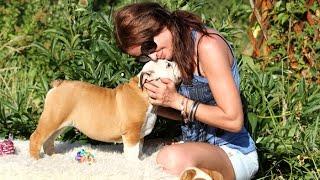 Жизнь удалась-2:-)) Золотой Оскар)) PR company BulldogFILL купить щенка английского бульдога