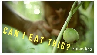 Wild Food Foraging! How to gather, cook, eat and enjoy MAYAPPLE!
