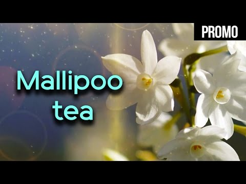 Mallipoo tea Promo | Malabar to Morocco | Purple note | Viji Krishnan