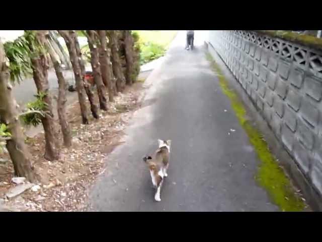 ばあちゃんの散歩の後を付いてくる猫前半
