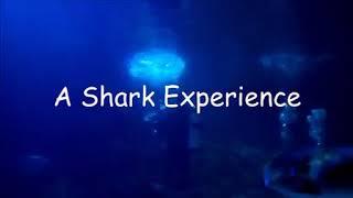 Челюсти 2018 или Даня с акулами