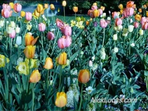 NICK LUCAS - Tip-toe Through the Tulips (Original 1929 Hit)