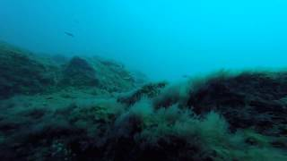 Glenny and Weronika Diving in Gran Canaria with Blue Water Diving in El Cabron July 2015
