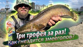 ТАЙФУН ИЗМЕНИЛ русло реки Рыбалка в городе Как гнездятся змееголовы Три трофея 2019 10