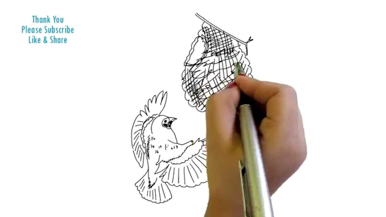 Drawing printout how to draw a bird nest - Drawing Printout How To Draw A Bird Nest 8