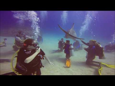 Scuba Diving with Dolphins in Roatan Honduras 5/31/2016