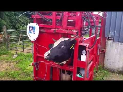 Hydraulic Cattle Crush - Joseph Hyland thumbnail