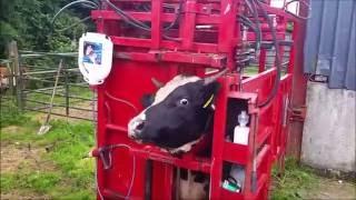 Hydraulic Cattle Crush - Joseph Hyland