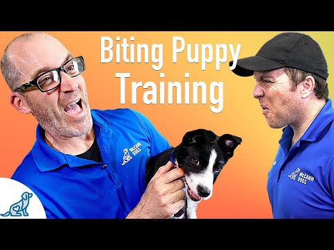 how-to-prevent-your-puppy-from-biting---professional-dog-training-tips