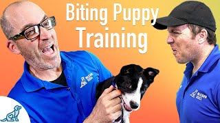 How To Prevent Your Puppy From Biting  Professional Dog Training Tips