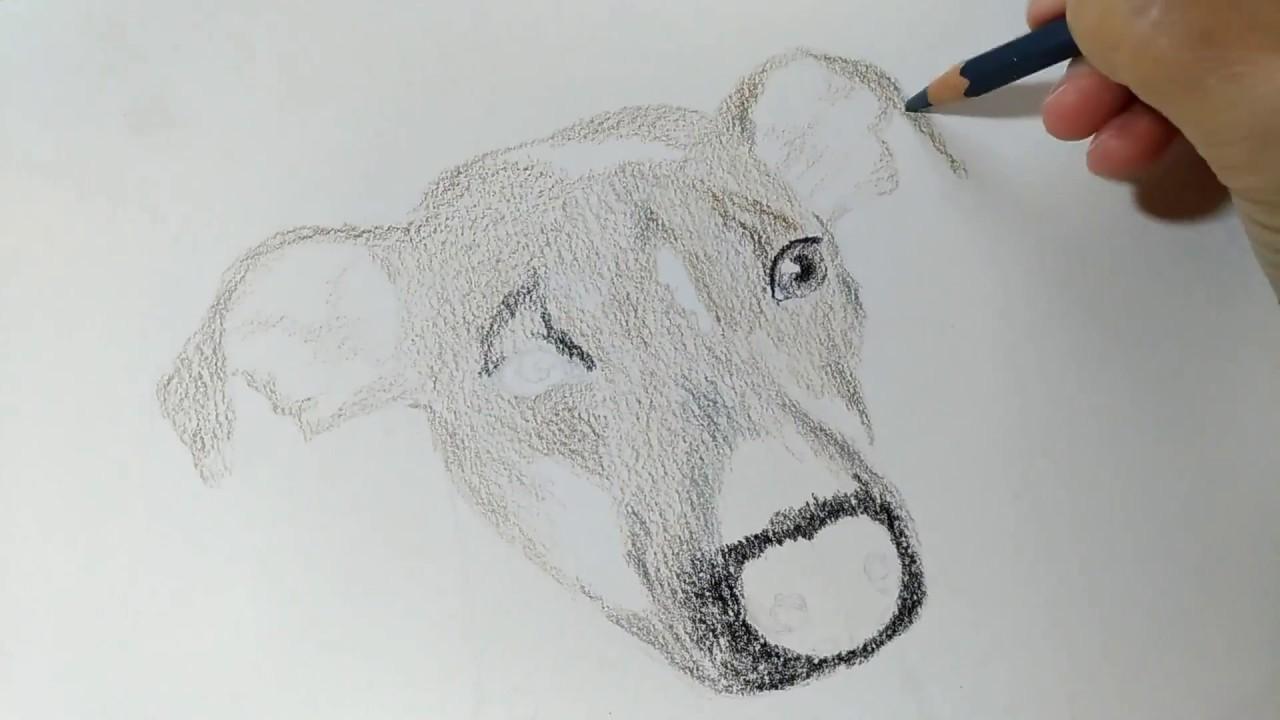 Kresba Akvarelovymi Pastelkami Postup Drawing Of Two Dogs With