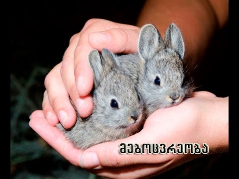 mebocvreoba mcire fermerebisatvis. Rabbit small farmers
