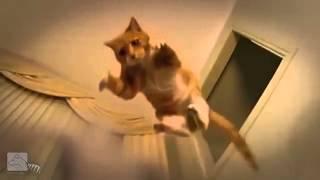 Приколы про животных Кот изверг Смотреть Онлайн!! 2014