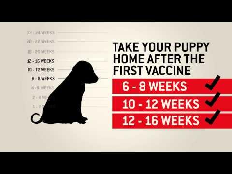 Understanding dog vaccinations - Purina