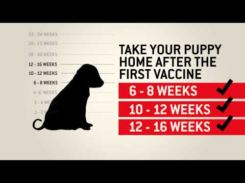 Understanding dog vaccinations – Purina