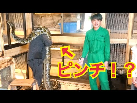 世界最長のヘビに会いに行ったら飼い主も大変なことになっていた!【大蛇カフェ】