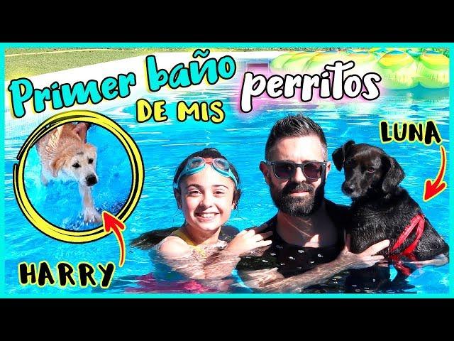 PRIMER BAÑO de MI CACHORRO HARRY en LA PISCINA 🐶 NOS BAÑAMOS en la ALBERCA con MIS PERRITOS