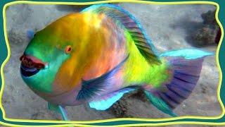 ТОП 10 САМЫХ красивых рыб в мире