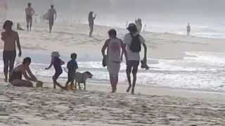 Pit Bulls  Loose On Gold Coast Beaches Australia!!
