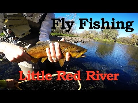 Fly fishing the Little Red River