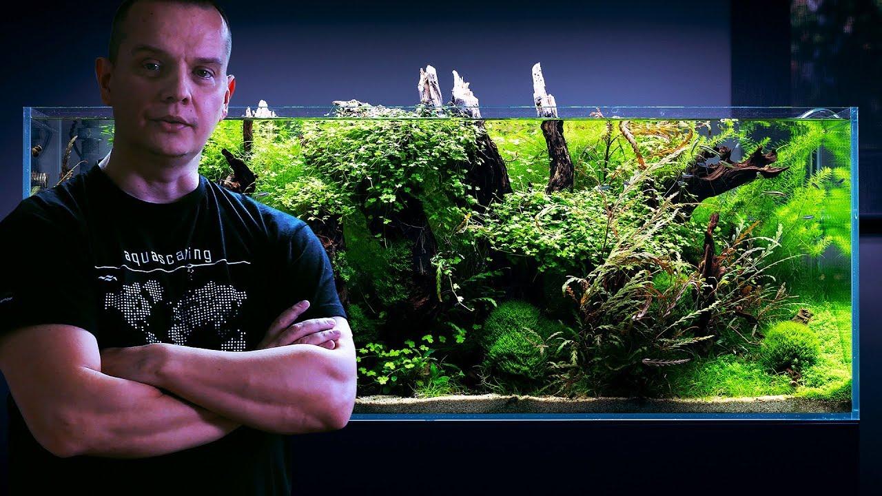 Forest Aquascape Aquarium Plants Trimming Session By Green Aqua Youtube