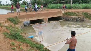 Net Fishing in the Stream at Kampot Province