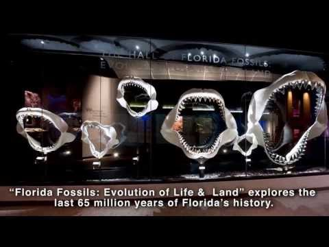 Permanent exhibits overview - Florida Museum of Natural History