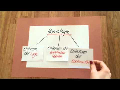 Anatomie und Morphologie - YouTube