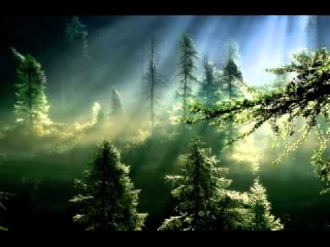 Beautiful Forest