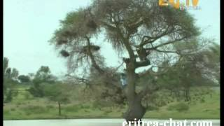 eritrean bahlawi music tehayish asfeha gudjile bahli wata zoba debub