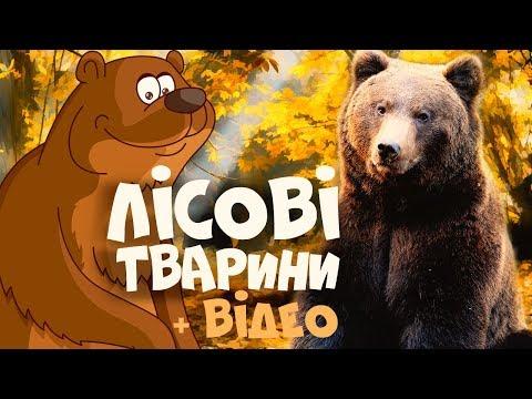 ЛІСОВІ ТВАРИНИ для дітей - розвиваючі мультики українською мовою