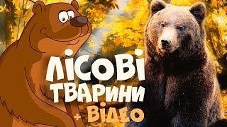ЛІСОВІ ТВАРИНИ для дітей  розвиваючі мультики українською мовою