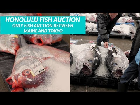 HONOLULU FISH AUCTION-Where HAWAII Gets Most Of It's FRESH SEAFOOD- WOW