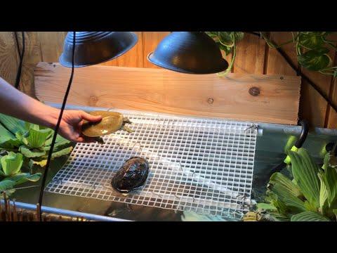 Releasing Turtles in an INDOOR 180 Gallon Tank