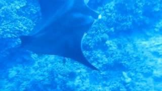 C Big Island: Ocean Adventures