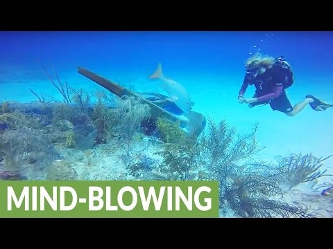 Cruise ship anchor destroys ancient coral reef