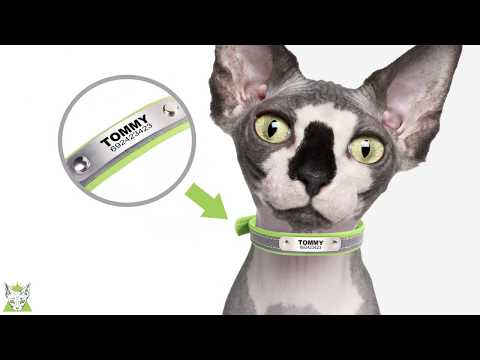 custom-cat-collar