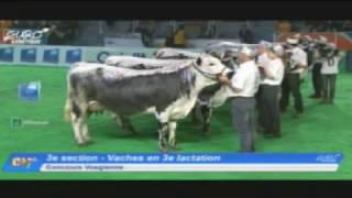 EG2017 - Vosgienne - Vaches en 3e lactation