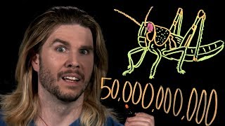The Largest Insect Swarm | Because Science Live!
