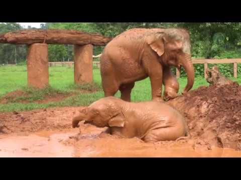 Dok Gaew: The Orphanage Life Under Care Of Elephant Nanny