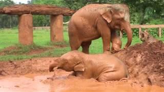dok-gaew-the-orphanage-life-under-care-of-elephant-nanny