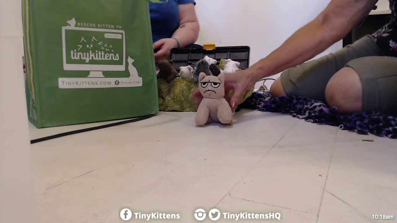 Former Feral Cub packs his #TinySuitcase and goes to his forever home!  TinyKittens.com