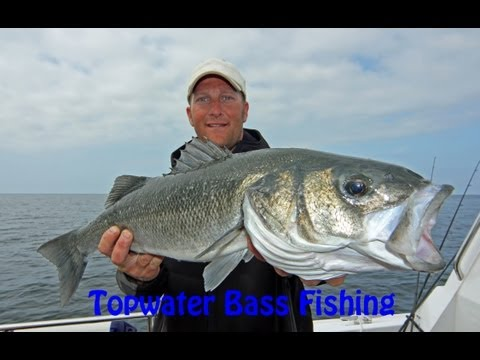 How To Catch Bass On Surface Lures