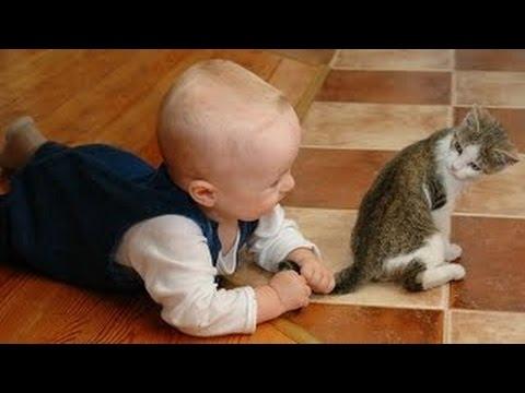 gaticos recien nacidos jugando con bebes